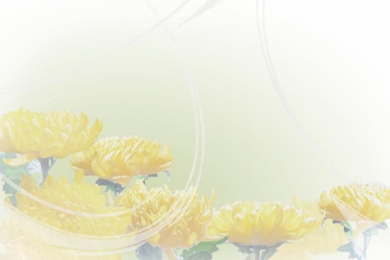 黄色い菊の喪中はがき(横書き)